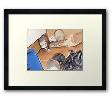 ferret action shot! Framed Print