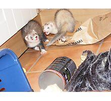 ferret action shot! Photographic Print