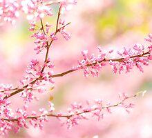 pinky spring by Alexandr Grichenko