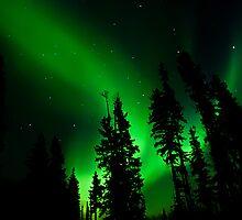 Backyard Auroras #4 by peaceofthenorth