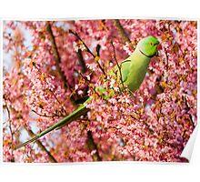 Springtime Feeding Poster