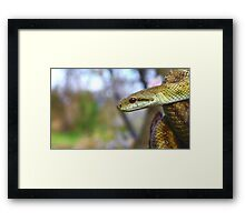 """""""You Know, I'm Really Not So Bad"""" Framed Print"""