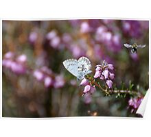 little butterfly  and bumble bee Poster