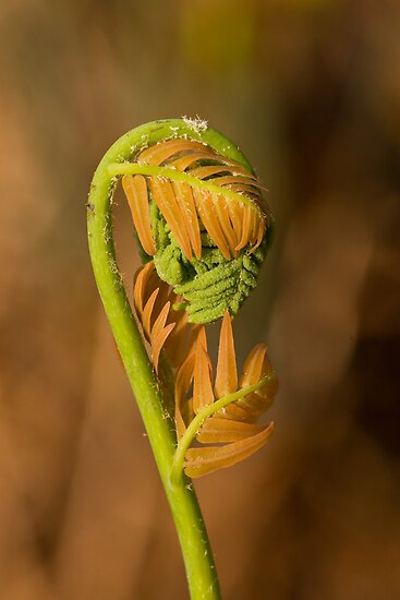 Two Tone Fern by ElyseFradkin