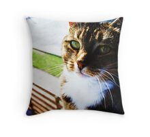 The Abyssinian knows your secret Throw Pillow