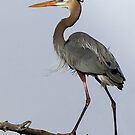 Heavenly Heron2 by Jim Cumming
