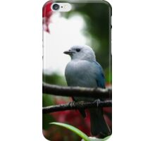 Blue-Gray Tanager iPhone Case/Skin