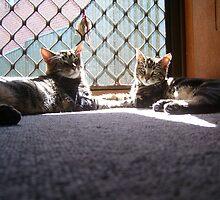 Max and his bestfriend Radar by bellerina