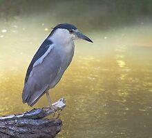 On Golden Pond by EugeJ