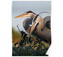 Beautiful Herons Poster