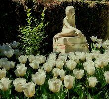 Blushing Tulips by photosan