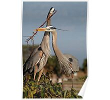 Herons Working as a Team Poster