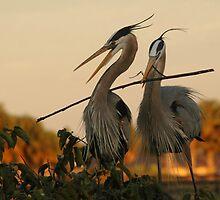 Herons Building a Nest, Wetlands of Florida by Laurel Haarer