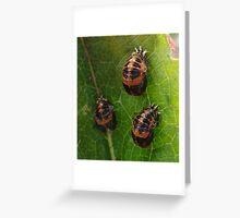 Ladybird Lavae Greeting Card