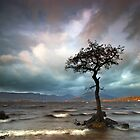 Single Lone Trees by Jeanie