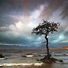 The Tree by Jeanie