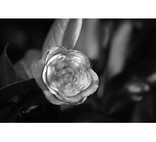 Perception Dos Photographic Print