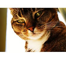 Educated Cat Photographic Print