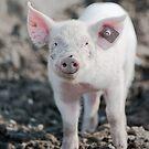 happy pig by peterwey