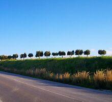 alberi by anna grazia miccoli