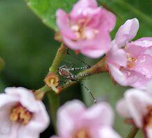 Accidental Spider; La Mirada, CA USA by leih2008