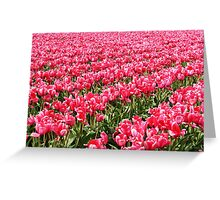 Acres of Pink Tulips Greeting Card