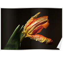 The Parrot Tulip Poster