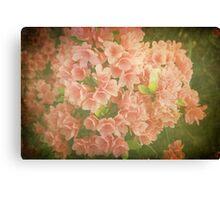 Vintage Azaleas Canvas Print