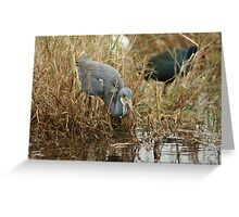 Tri-Color Heron 2 Greeting Card