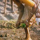 Planting rice by indiafrank