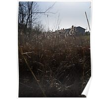 Cat Tails Behind the House Poster