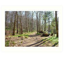 Woodland path in Dalkeith Art Print