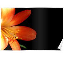 Oranje flower 6172 Poster