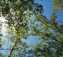 Starlit Trees by Susan Blevins