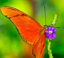 Butterfly 6 by Scapevision