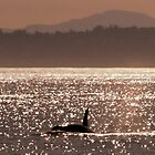 Sunset Orca by JamesA1