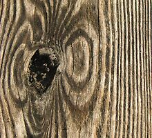 Weathered wood by CherylC