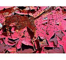 Fushcia Flakes Photographic Print