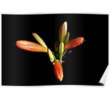 Oranje flower 6168 Poster