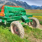Tractor in the Tulip Field by Tracy Riddell
