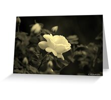 Who needs the Red Rose? Greeting Card