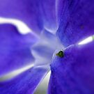 Aphid on Flower by Sandra Moore