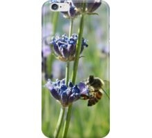 Bee on lavender flowers. Snowflake, Arizona, USA. iPhone Case/Skin