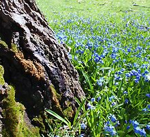 Spring is in the Air - A Touch of Green  by Vegotsky