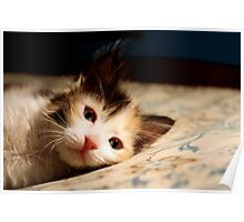 There's some Sushi on my Bed! Poster