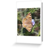 Common brown butterfly Greeting Card
