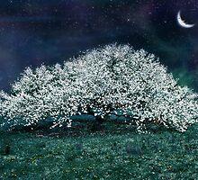 Spring Magic by Elizabeth Burton