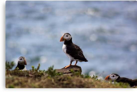 Puffin In The Middle by Lynne Morris