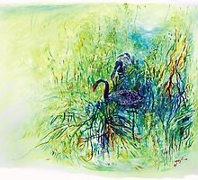 Black Swans -Tamar Valley, Tasmania by Pieter  Zaadstra