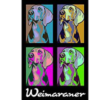 Colourful Weimaraner poster-style portrait Photographic Print